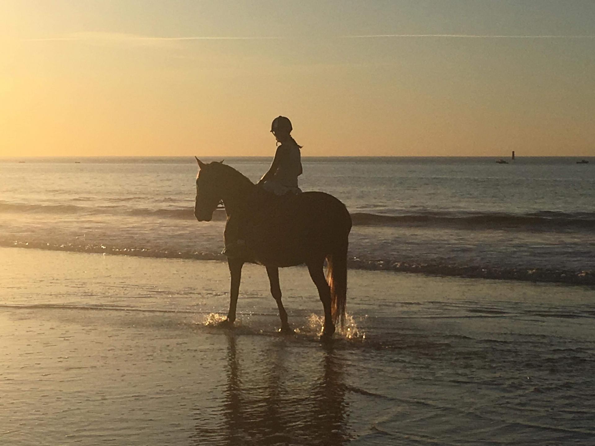 Bulle de Crins - Monitrice d équitation indépendante